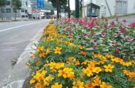 国道230号線の花壇の様子