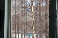 birch-from-the-window